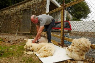 Dún na Sí - Shearing Demonstration