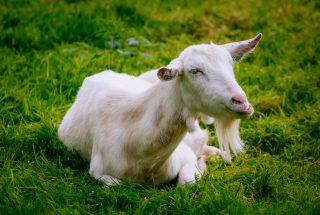 Dún na Sí- Pet Farm 6