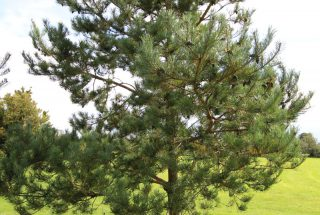 Dún na Sí - Adpot a tree (2)