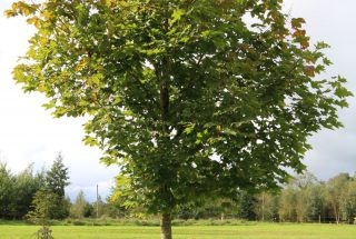 Dún na Sí - Adpot a tree (1)