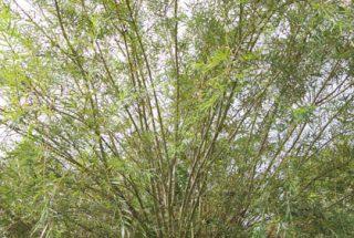 Dún na Sí - adopt a tree 23