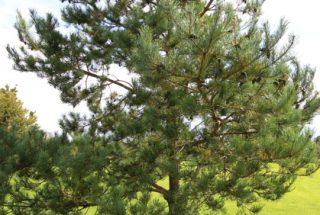 Dún na Sí - adopt a tree 11