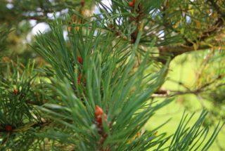 Dún na Sí - adopt a tree 9