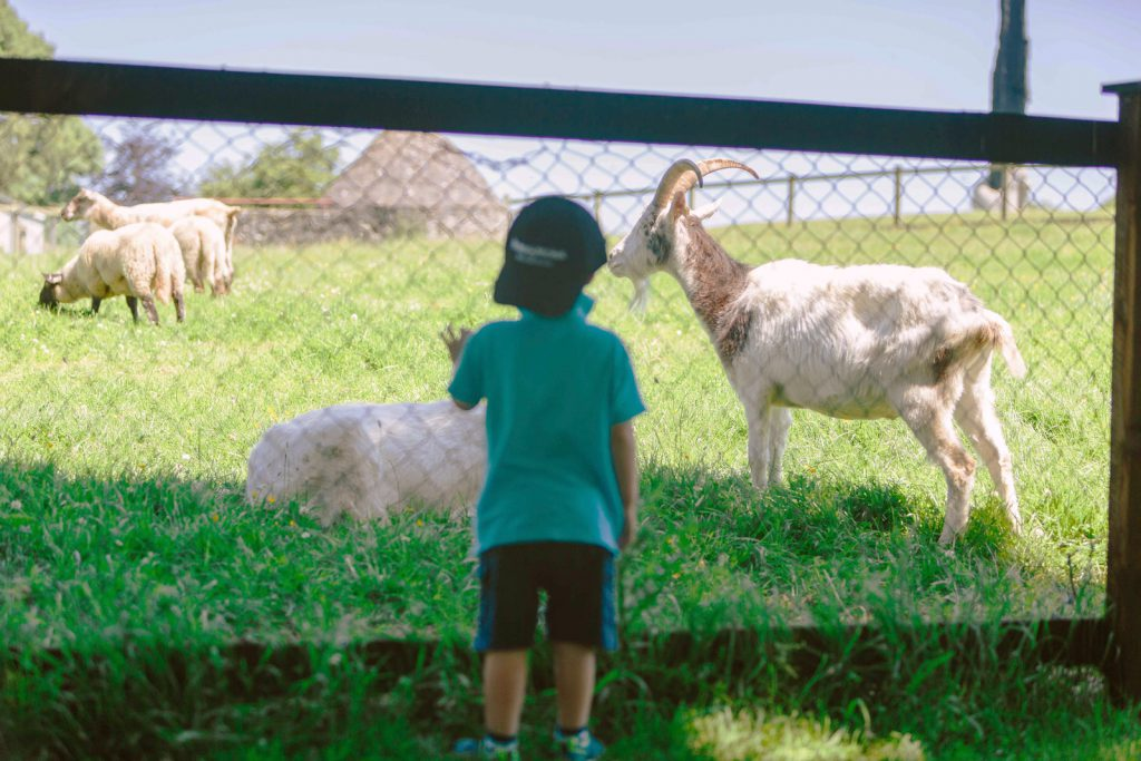 Dún na Sí - Pet Farm Image
