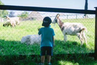Dún na Sí - Pet Farm 3